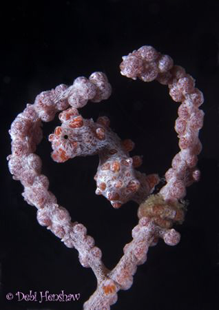 """I Love You 2"" Another angle of the heart encased pygmy :o) by Debi Henshaw"
