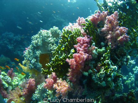 Lovely Coral scenery by Lucy Chamberlain