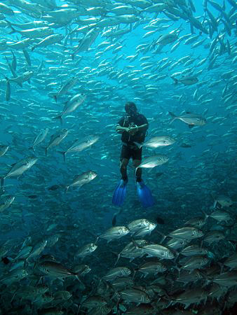 Diver and jacks, Tulamben by Doug Anderson