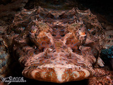 Crocodile fish portrait - Gili Banta, Indonesia (Canon G9... by Marco Waagmeester