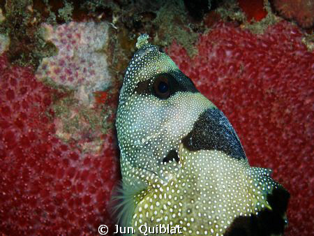 Unknown Fish, Taken in Agutayan Shoal by Jun Quiblat 