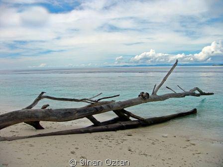 This shot was taken on an island at Raja Ampat while we d... by Sinan Oztan