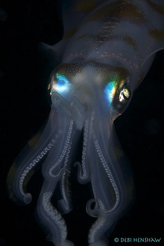 """Bright Eyes""  Night Dive in Manado - Tasik Ria House ree... by Debi Henshaw"