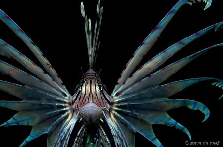 This lionfish was pretty funny. I didn't realy want to ta... by Steve De Neef