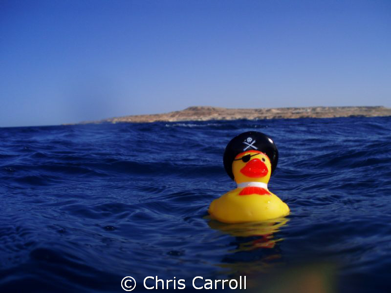 Captn. Quack Sparrow! by Chris Carroll