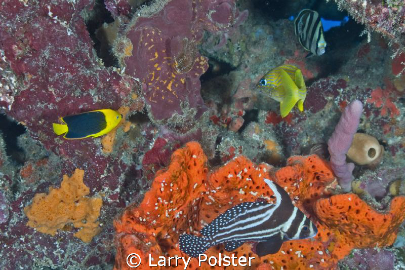 Typical Caribbean fish menagerie by Larry Polster