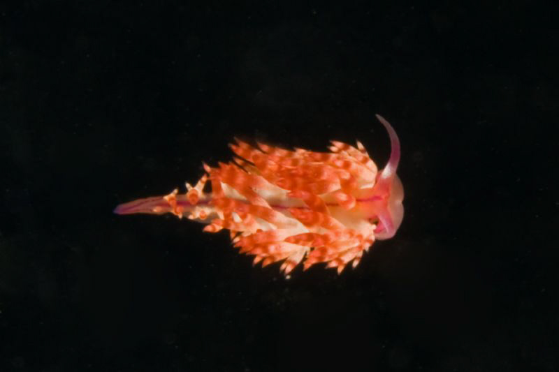 Love those nudis in Lembeh by Larry Polster