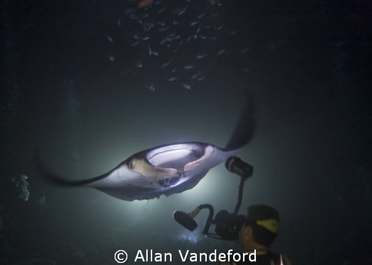 Manta night dive near Kailua Kona Int'l Airport from Kona... by Allan Vandeford