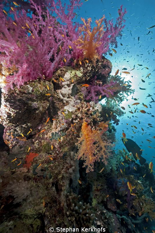 Magnificent marine life at Jackfish Alley. by Stephan Kerkhofs