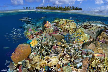 """""""Magic reef"""" /  Digital composite portraying marine life ... by Andre Seale"""