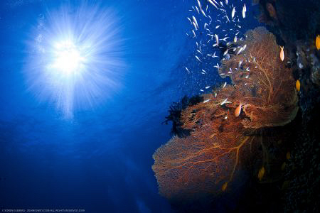 Seafan in the Similans by Soren Egeberg