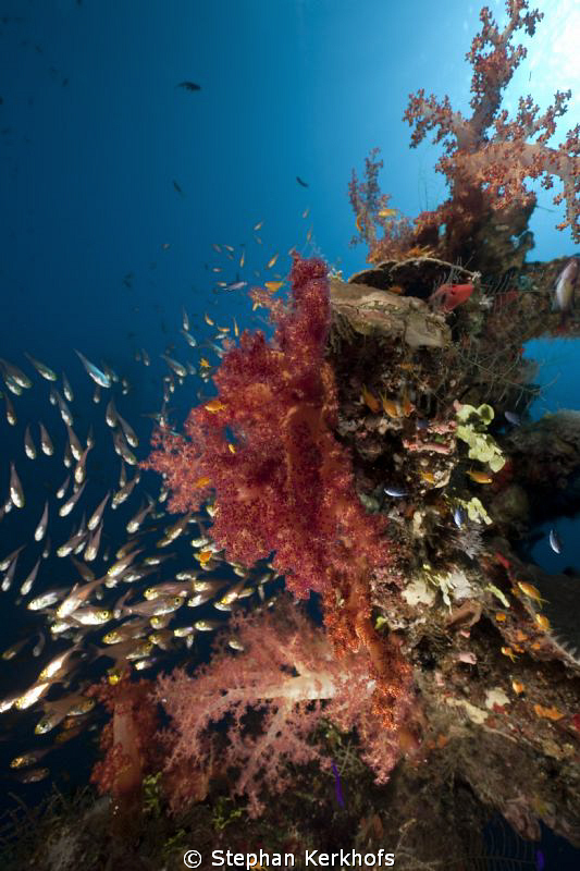 Beautiful coral of Ras Mohammed. With a bit imagination i... by Stephan Kerkhofs