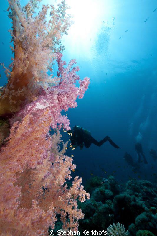 Awsome softcoral taken at Gordon Reef Tiran. by Stephan Kerkhofs
