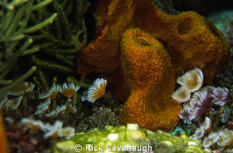 Reef scene.  Film-Fugi Velvia by Rick Cavanaugh