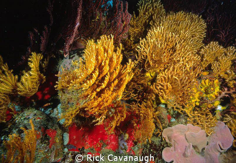 reef scene film,  Velvia by Rick Cavanaugh