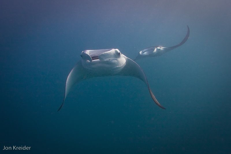 mantas...hannifaru, baa atoll, Maldives by Jon Kreider