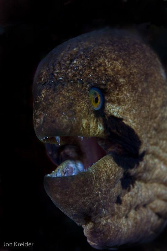black cheek eel....they actually bite! by Jon Kreider