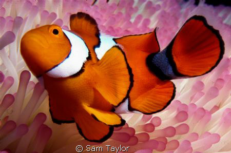 It's just Nemo by Sam Taylor