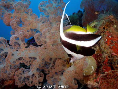 Bannor fish by Stuart Ganz