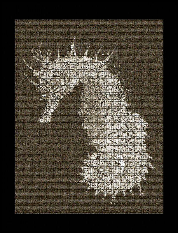 Seahorse photoshopped for a poster print. by Andy Kutsch