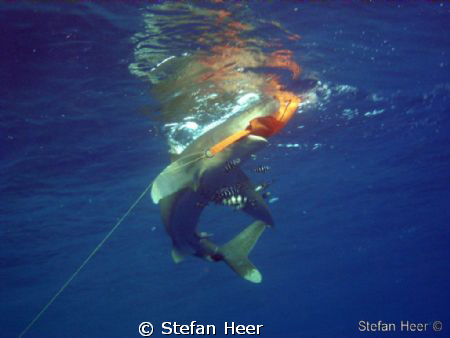 Safety Stop? 