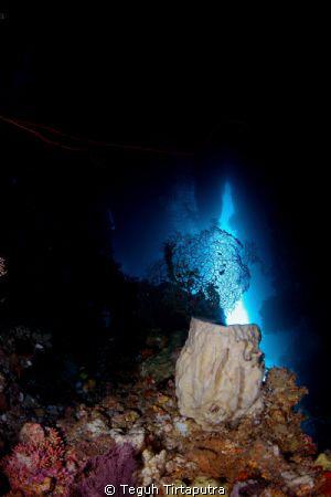 taken at Hukurila Cave, Ambon, Indonesia. Using some ligh... by Teguh Tirtaputra
