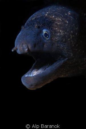Taken @ Karaburun/Izmir. If you want to take morray eel s... by Alp Baranok