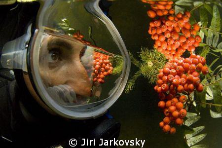 """Autumn fruits"" by Jiri Jarkovsky"