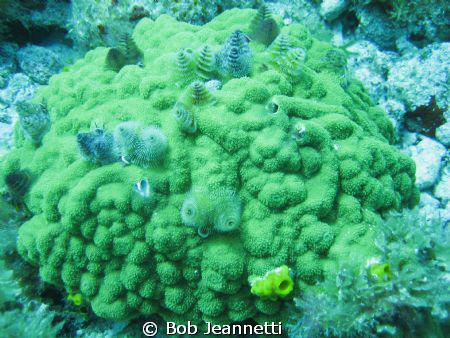 Beautiful worms by Bob Jeannetti