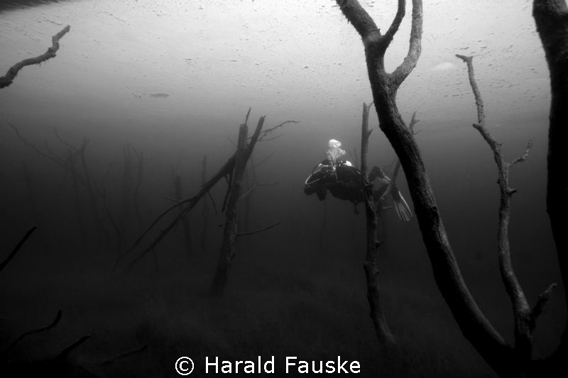 "diver swimming through a ""magic forrest"" under the ice. T... by Harald Fauske"