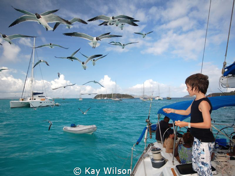 Gabriel and the seagulls. (Tobago Cays).