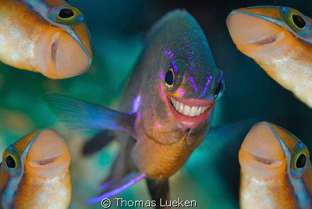 dive with a simile II by Thomas Lueken