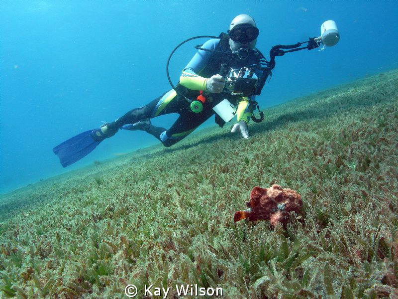 Frog fish with diver... by Kay Wilson