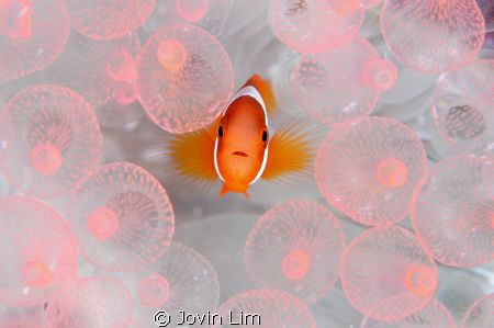 """Baby nemo in pink bubbles""