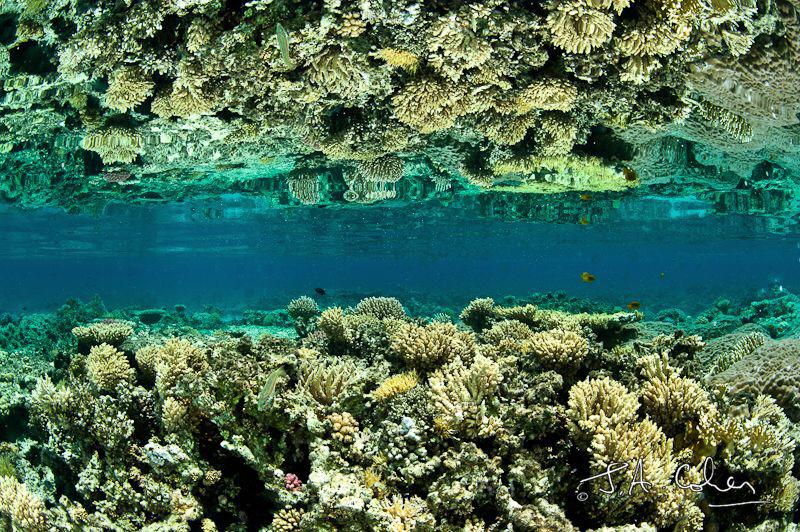 Reef Reflection by Julian Cohen