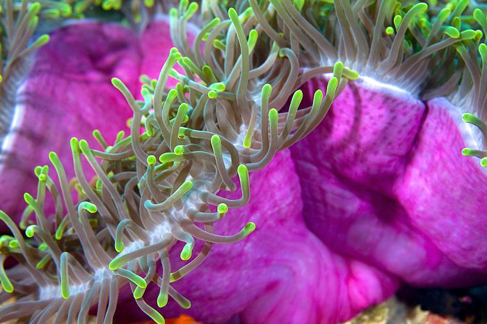 Anemone showing off by Jon Kreider