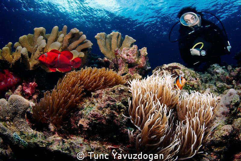 A reef scene :) by Tunc Yavuzdogan