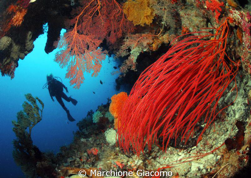 The red garden Nikon D200, 10,5mm nikon,twin strobo Wak... by Marchione Giacomo