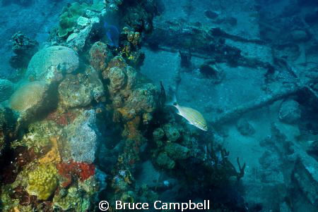 Hull of the RMS Rhone by Bruce Campbell