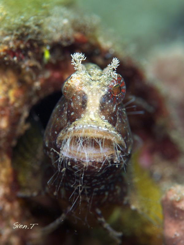 Anybody knows the name of this hairy mouth guy? Thanks to... by Sven Tramaux