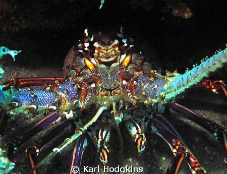 Cray fish tentacles by Karl Hodgkins