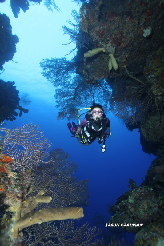 Wall Diving the East End of Grand Cayman is a photographe... by Jason Eastman