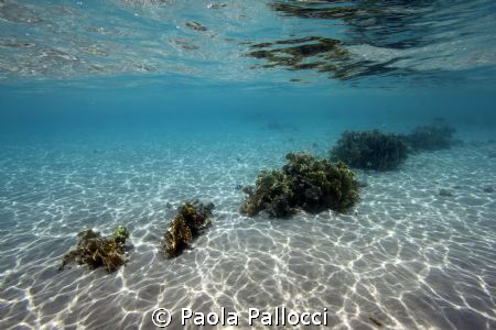 very clean water by Paola Pallocci