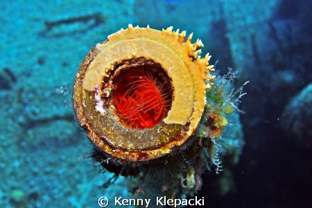Fire in the Hole!!  Fire Clam inside a gun turret on the ... by Kenny Klepacki