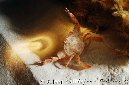 crab claw..finger puppetry..... oooh a crescent moon ... ... by Aileen Caffrey