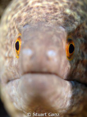 Eye to eye by Stuart Ganz