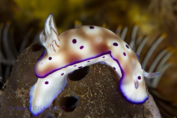 One my first nudi shots. by Graeme Cole