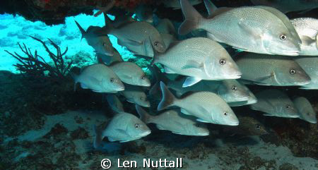 not sure what they are but lots of them in  one place...F... by Len Nuttall