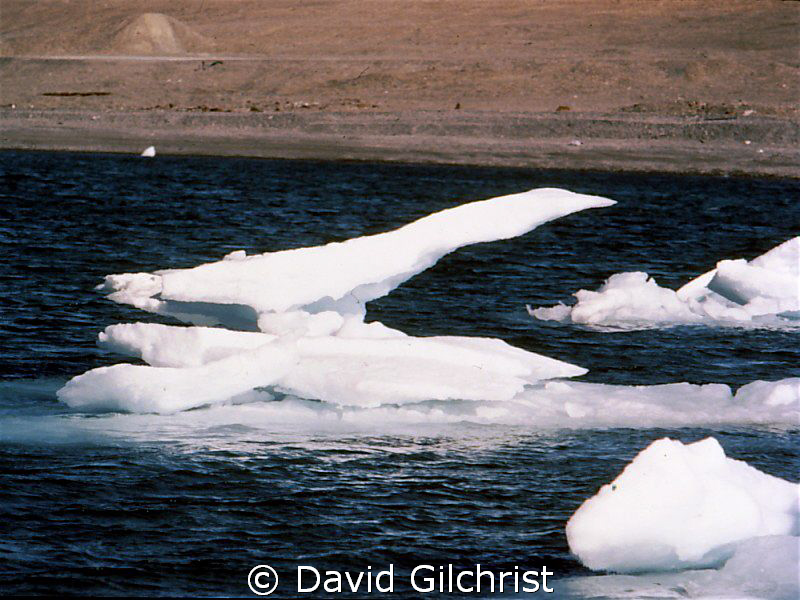 Cleared for Takeoff! Drifting ice takes on the appearance... by David Gilchrist