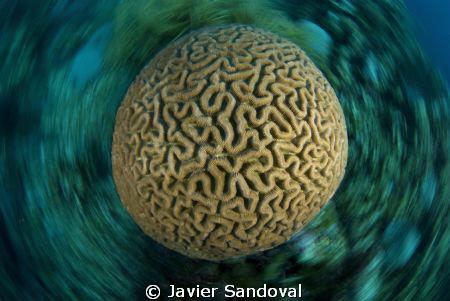 dizziness brain by Javier Sandoval